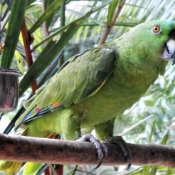 Neo Fauna, Puntarenas, Costa Rica