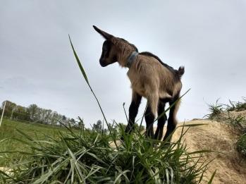 Prodigal Farm, Rougemont, NC