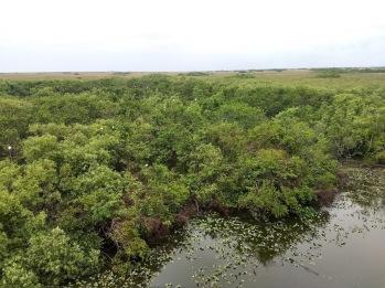 Shark Valley Observation Tower, Everglades National Park, Miami, FL